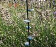 Wespennest Im Garten Elegant Insektentränke Mit Landemöglichkeit Bauen