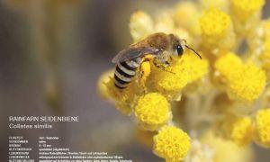 37 Neu Wildbienen Im Garten Schön