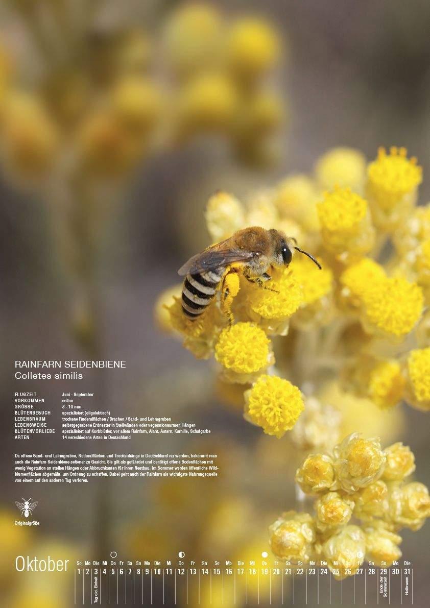 Wildbienen Im Garten Elegant Kalender I Wildbienen Garten Webseite