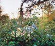 Wildblumen Im Garten Einzigartig Charlie Mccormick Takes A Modern Approach to A Traditional