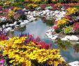 Wildblumen Im Garten Elegant oraliasoto On