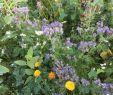 Wildblumen Im Garten Frisch Saatgut Für Blühstreifen Wird Kostenlos Abgegeben