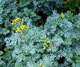 Wildblumen Im Garten Luxus Pin Auf Wildblumen Und Kräuter