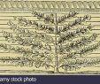 Zaun Für Garten Frisch E 3 Stockfotos & E 3 Bilder Seite 33 Alamy