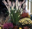 Ziergräser Für Den Garten Das Beste Von Ziergräser Im topf Für Terrasse Und Balkon