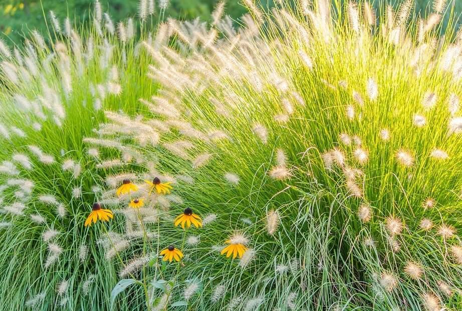 graeser bepflanzung im garten
