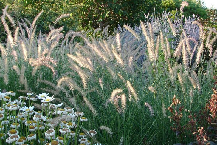 Ziergräser Für Den Garten Inspirierend Ziergräser Für Den Garten Tipps Und sorten