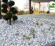 Zierkies Garten Luxus Terrasse Mit Biasca Gneis Steingarten Mit Zierkies