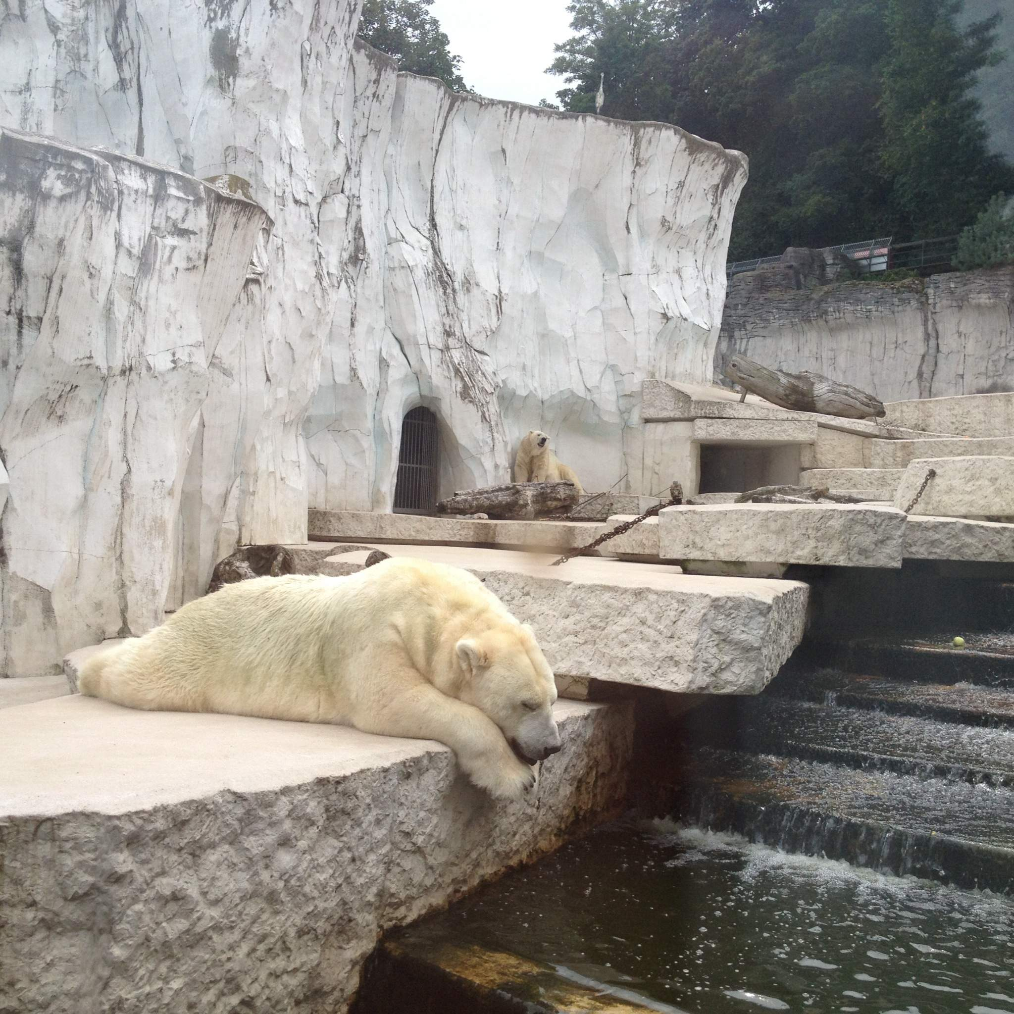 Polar bear at Karlsruhe Zoo
